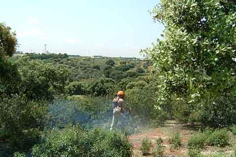 Bosque y reforestación