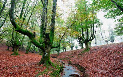 Qué es un proyecto de obra forestal