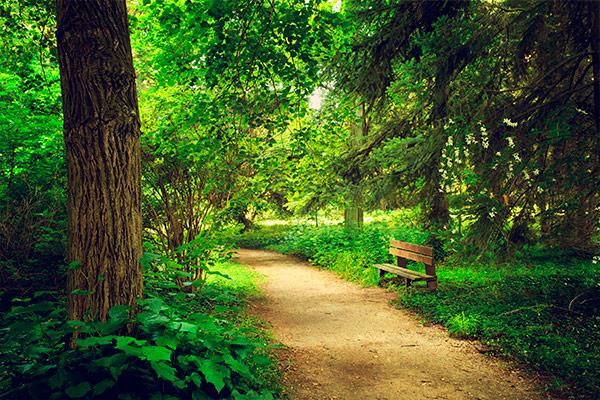 """alt=""""banco en un sendero de un parque frondoso"""""""